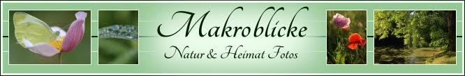 Makroblicke